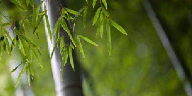 Bamboo textiles no more