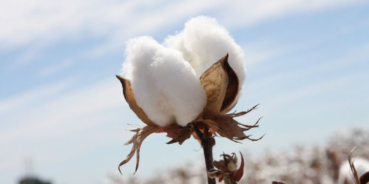 Cotton vs Polyester for