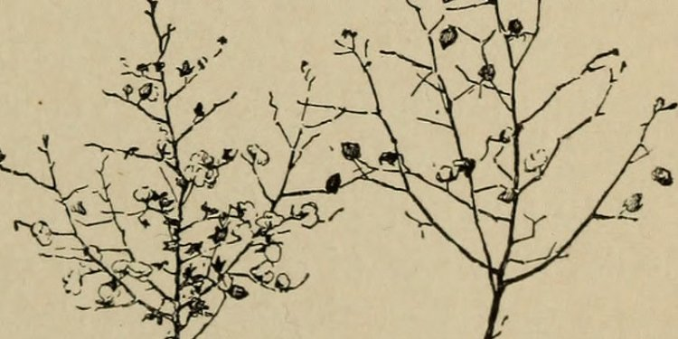 Image from page 22 of Beginners botany (1909