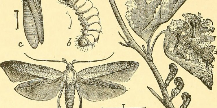 Image from page 353 of Economic entomology for the farmer and fruit-grower (1906