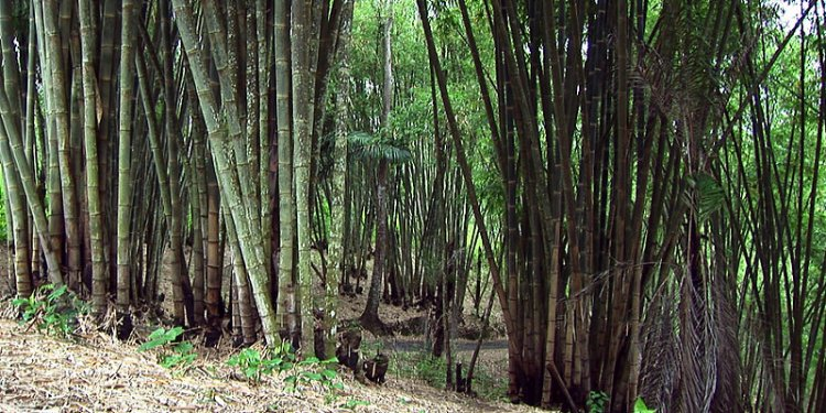 Indonesia - Flores - Bamboo - 2