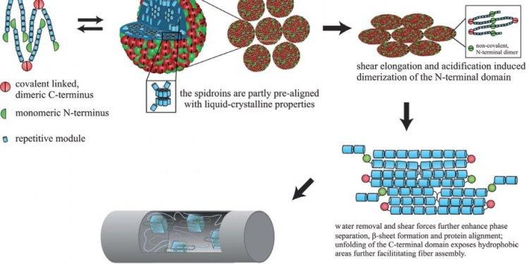 Schematic formation mechanism