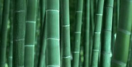 Bamboo-background