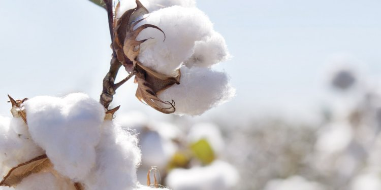 Properties of cotton